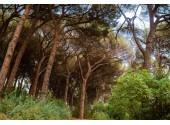 Вилла  «Дивный Мир Карасан» | парк Красан